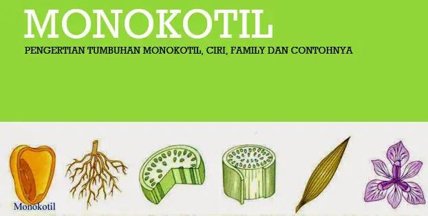 tumbuhan-monokotil