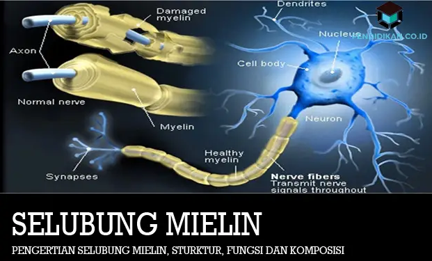 selubung-mielin